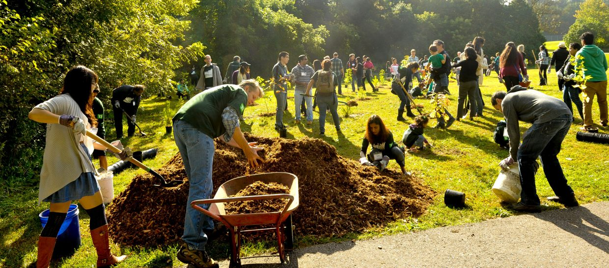 Volunteers help plant trees.