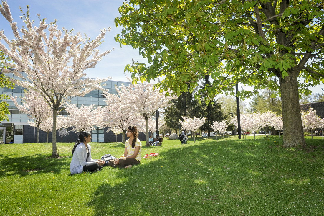 Students chat in the cherry orchard at University of Toronto Scarborough.